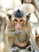 Cute Infant Monkey Eating