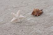 Beach Sand Sea Shell And Starfish
