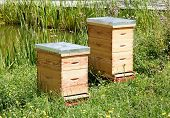 Two hives in a meadow, a house of bees in summer