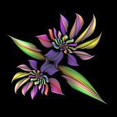 Spiraling Star Flower