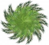 illustration with palm leaves isolated on white background