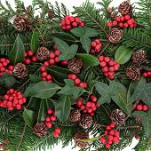 Christmas and winter flora with red berry holly, ivy, mistletoe and spruce fir over white background