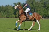 TSELEEVO, MOSCOW REGION, RUSSIA - JULY 26, 2014: Sam Browne of Oxbridge Polo Team in action during the match against the Tseleevo Polo Club during the British Polo Day. Oxbridge won 5-4