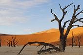 Dead Vlei, Sossusvlei, Namibia, southern Africa