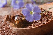picture of flax seed oil  - flax oil in a glass bottle flowers and seeds in a wooden spoon macro horizontal - JPG