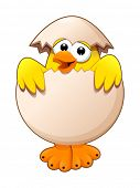 Funny chick in the egg. Cartoon and vector isolated character.