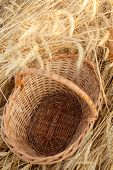 empty basket in field of wheat