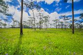 Green grass field in forest