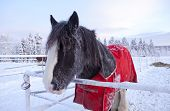 foto of blanket snow  - Horse in a paddock. Christmas time, snow and frost in the hair.