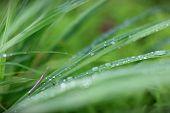 Grasshopper on leaf grass