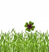 shamrock leaf in grass field on white background