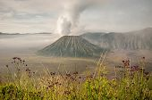 stock photo of bromo  - Foggy morning view of Bromo volcano at sunrise Java Indonesia - JPG