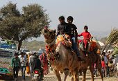 People On A Camel At Pushkar