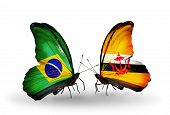 Two Butterflies With Flags On Wings As Symbol Of Relations Brazil And Brunei