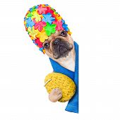 Shower Dog