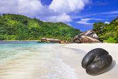 Seychelles islands - white  beach  with unique Coco de mer