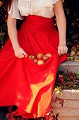 Woman In Red Gathering Apples