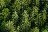 Healthy Green Forest