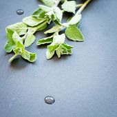 stock photo of oregano  - Twigs of fresh oregano on a dark stone background - JPG