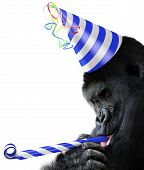 pic of blue animal  - Funny animal portrait of a black gorilla wearing a blue and white striped party hat and blowing a noisemaker horn - JPG