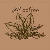 picture of coffee coffee plant  - logo with the image of germinated beans coffee leaves and coffee berry - JPG