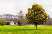stock photo of versaille  - Green tree at gardens of Versailles - JPG