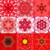 pic of kaleidoscope  - Collection of Nine Red Concentric Flower Mandalas - JPG