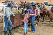 stock photo of feeding horse  - cowboy family of three feed the horses hay - JPG
