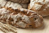 foto of crust  - Traditional fresh german crust bread - JPG
