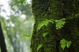 pic of fern  - Fern in the forest Doi Inthanon national park - JPG