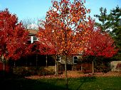 Autumn Coloured trees in a garden