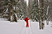 Winter Forest. Woman Skier Smiling