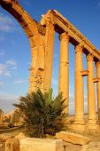 picture of euphrat  - early morning at ancient palmyra in syria - JPG