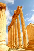 stock photo of euphrat  - historic columns of ancient palmyra in syria - JPG