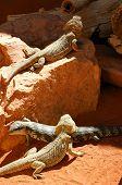 Australia Outback 100