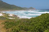 image of fynbos  - The Cape of Good hope is framed by the sea breaking onto a vegetation covered beach in the foreground - JPG
