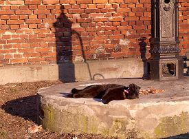picture of priest  - LODZ, Poland - March 05, 2013 The cat basking in the sun in the historic neighborhood of Priests mill factory in Lodz. - JPG