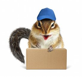 picture of laughable  - Funny squirrel courier with box and baseball cap on white - JPG