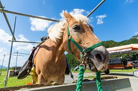 picture of feeding horse  - Horse feeding at the trough on the farm - JPG