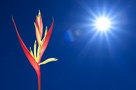 stock photo of heliconia  - Close up of tropical heliconia in summer - JPG