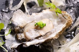foto of oyster shell  - Oyster on the half shell with fennel salad and seaweed - JPG