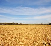 Farmfield In Autumn