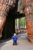 Baby girl first steps at Mariposa Grove, Yosemite