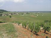 Burgundy Panorama