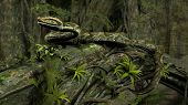 pic of green tree python  - amazon python on tree trunk - JPG