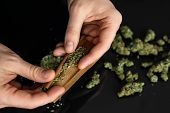 Man Rolling A Marijuana Joint. Man Preparing And Rolling Marijuana Cannabis Joint. Close Up. Close U poster