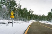Winter Forest Landscape With Asphalt Road With Yellow Dividing Lines. Travel Australia In Winter poster