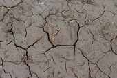 Drought, The Ground Cracks, No Water, Lack Of Moisture. Dried And Cracked Ground, Cracked Surface, D poster