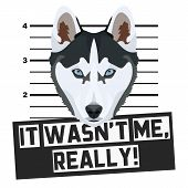 Illustration Mugshot Husky - The Guilty Dog ​​gets A Police Photo. Dog Lovers And Dog Fans Love Them poster
