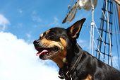 Adventurous dog